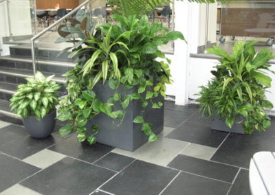 Large Outdoor Planters Calgary