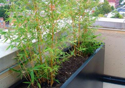 toronto planters