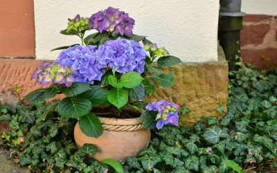 Tips for Choosing Garden Pots for Your Commercial Property