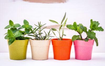 The Pros and Cons of Fibreglass Planters