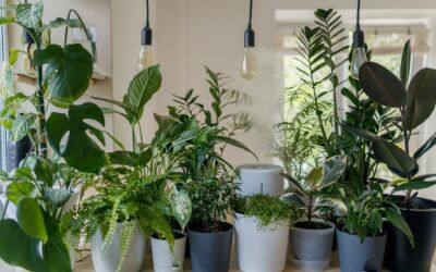 Tips to Secure Outdoor Planters